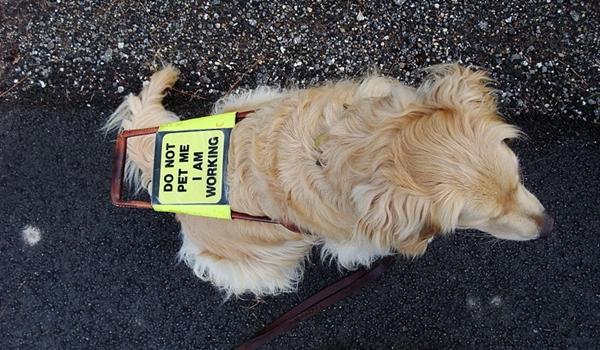 Understanding ADA Guidelines for Service Dogs in Restaurants