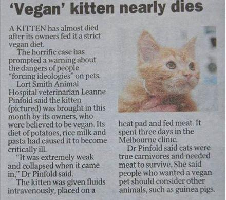 can you feed a cat a vegan diet
